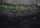 Boden und Bodenverbesserung
